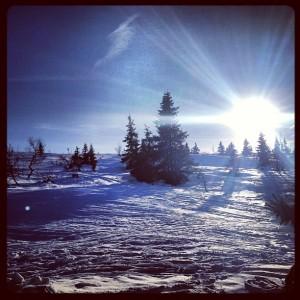 Snölandskap i sol